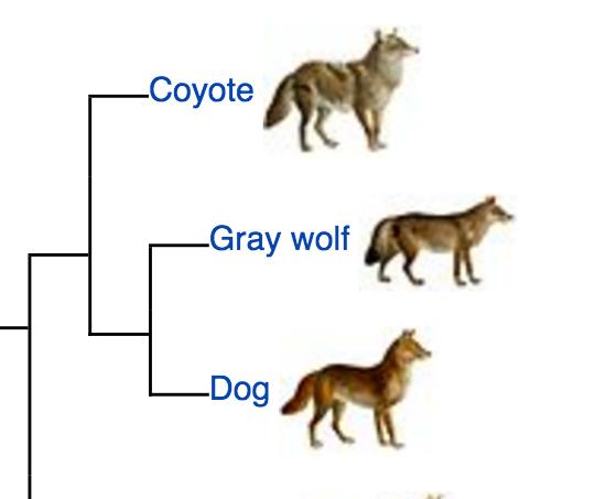 Dog Breed Family Tree