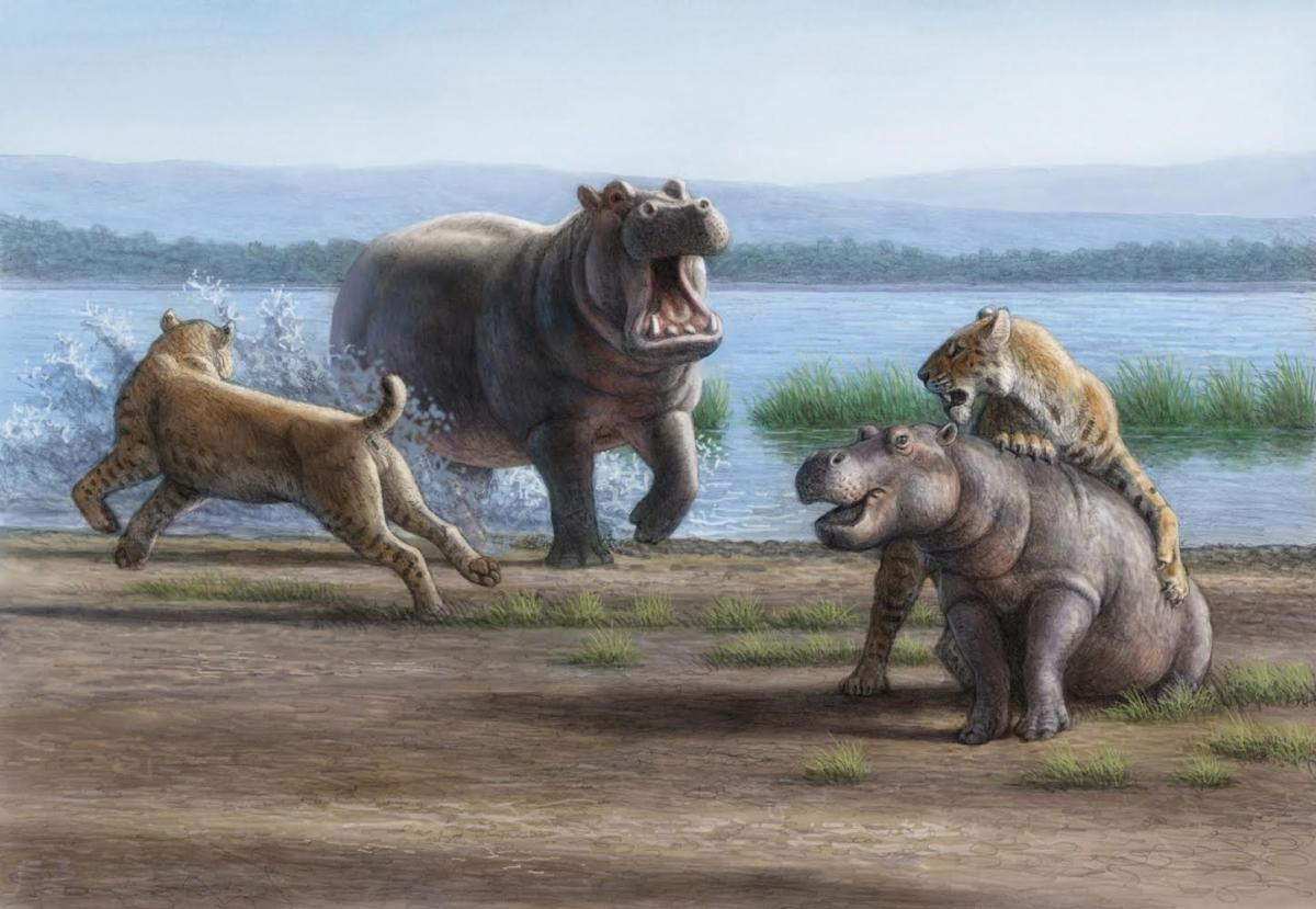 Hypercarnivores: Understanding The Past & Preserving The Future ...